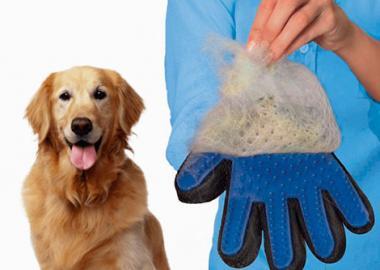 Дрессировка собак альметьевск