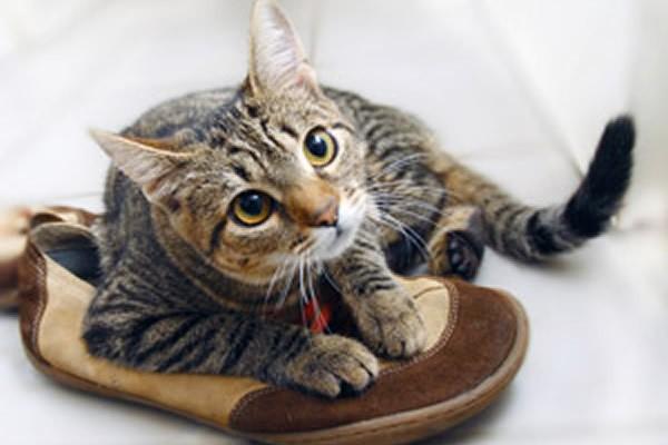 котик в туфлях