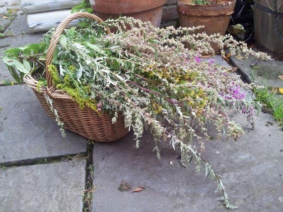 Травы и обереги для семьи и дома