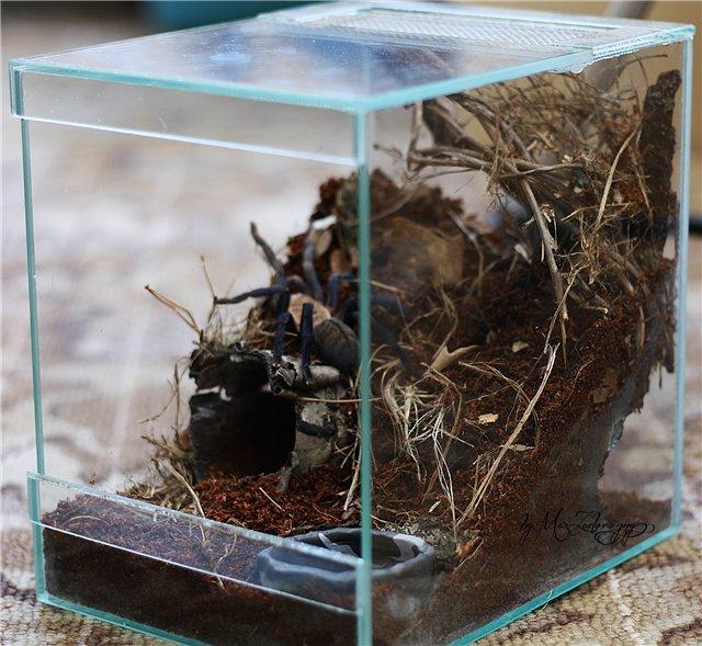 паук в террариуме