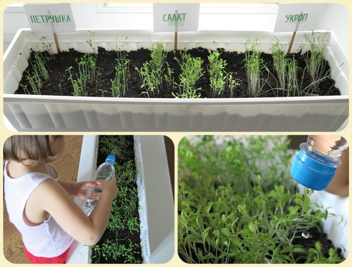семена и посадки