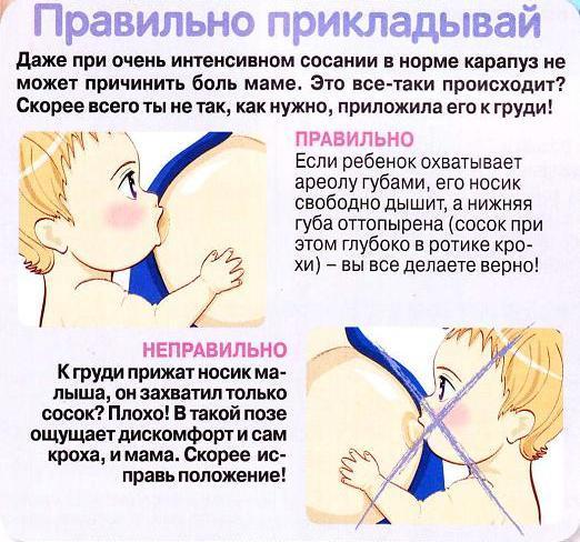 правильное кормление грудью