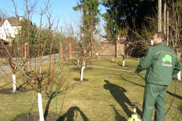 окрашивание стволов деревьев
