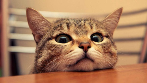 котик смотрит на стол