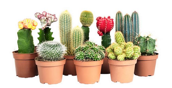 Народные приметы, связанные с растениями