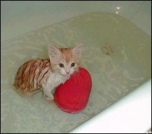 Как и как часто купать кошку / Можно ли купать кошку