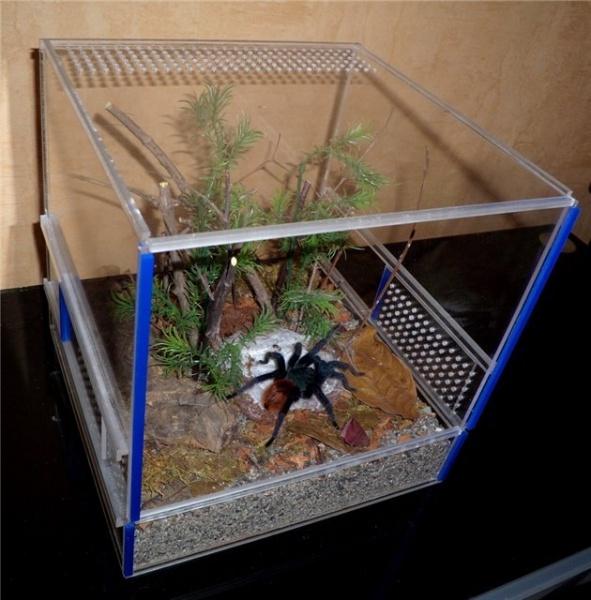 террариум для паука