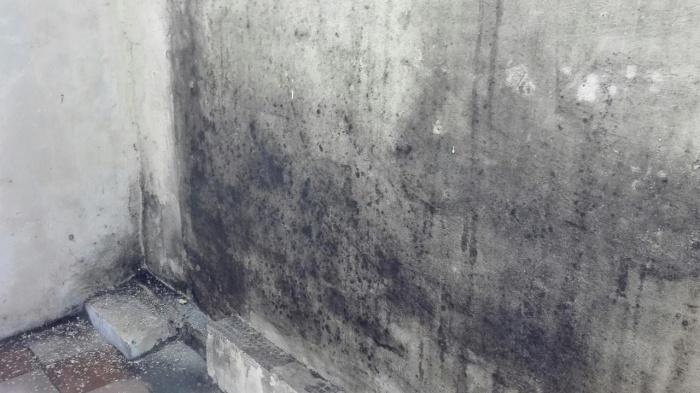 стены в плесени