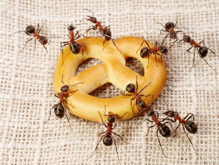 как вывести муравьев
