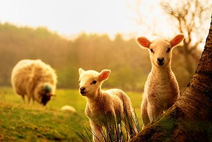 Народные приметы о погоде по животным